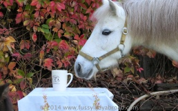 pony and tea
