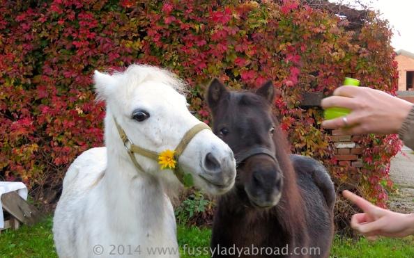 ponies posing